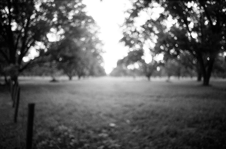 blurry tree line