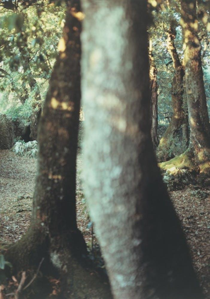 JoAnn Verburg, Sacred Trees (Heart Song), 2000