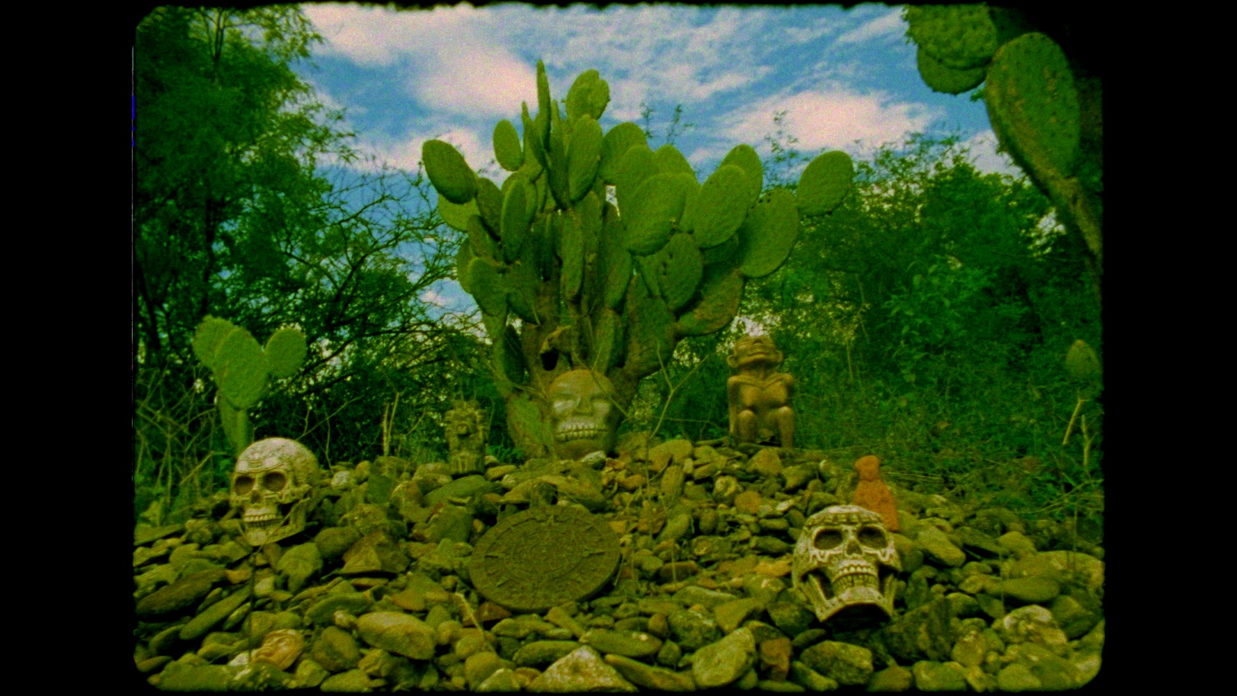 Image of cactus on hill with skulls