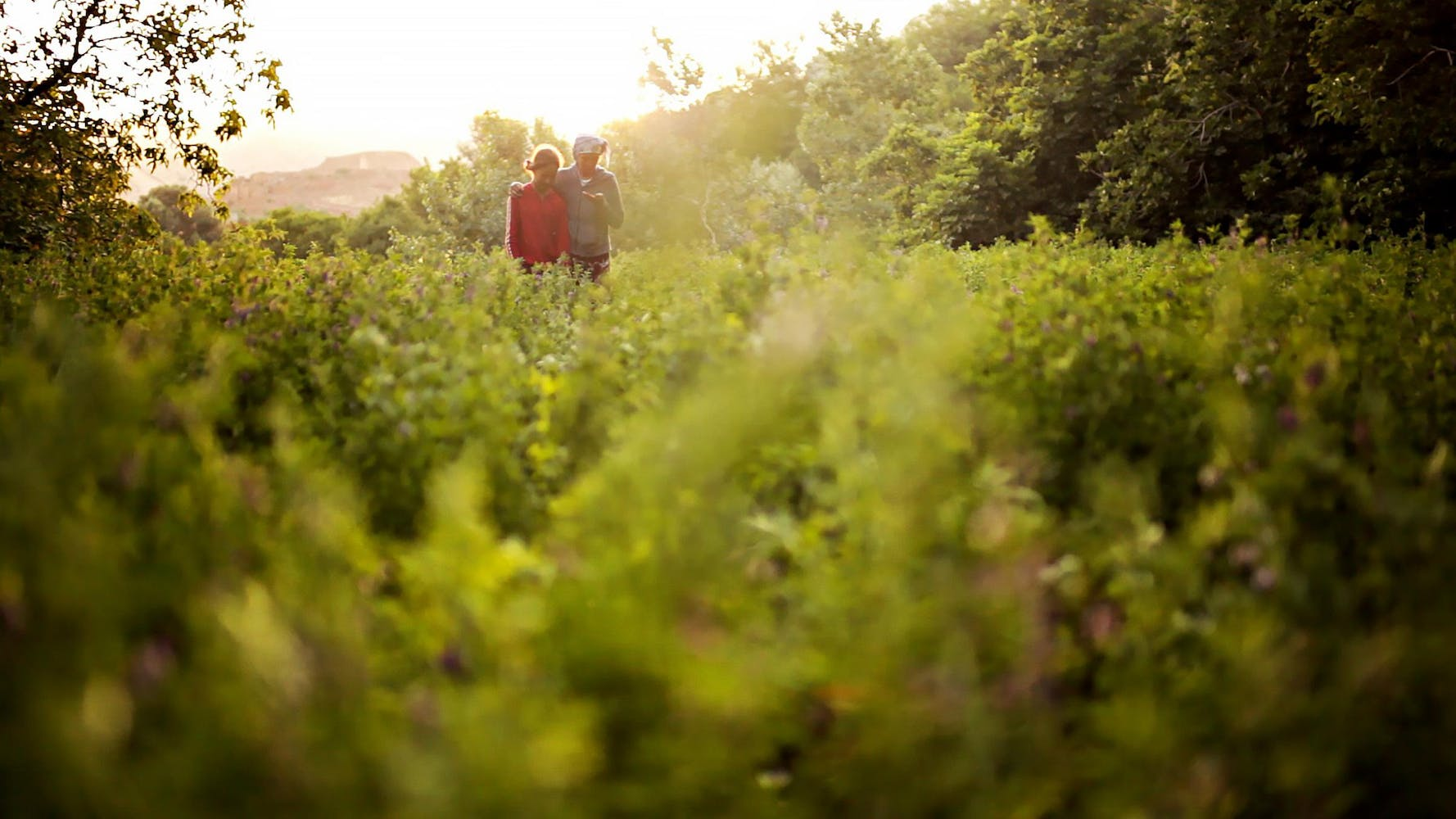 Two people walk together through a field of green plants and trees.