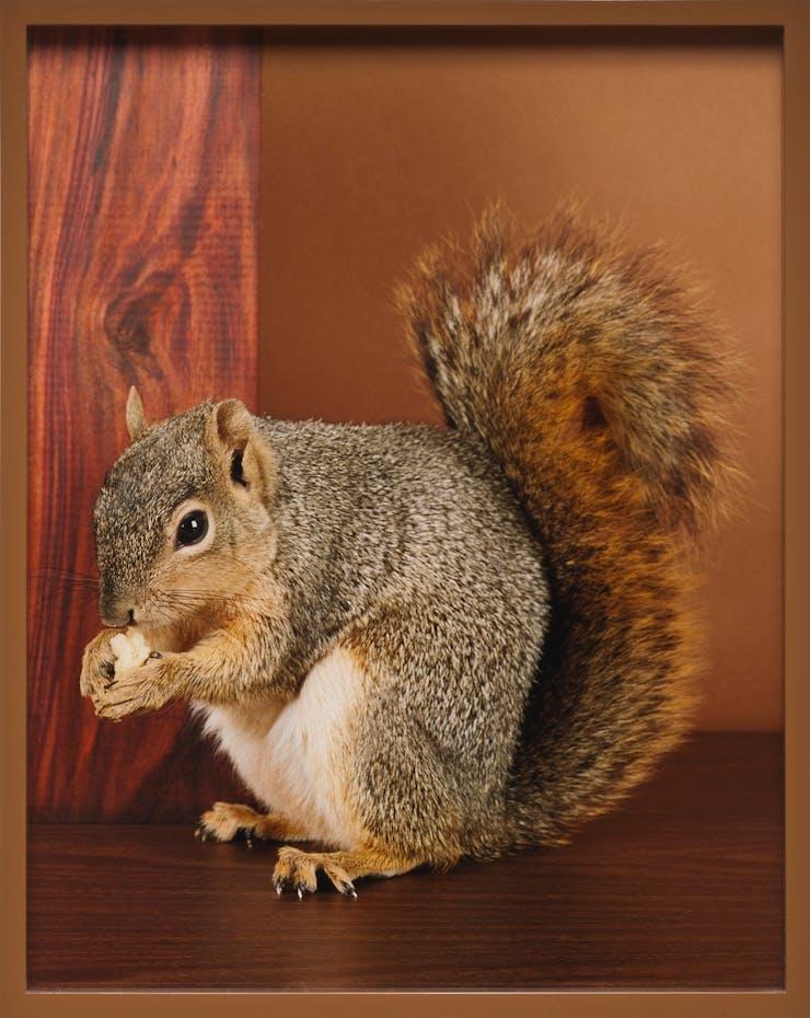 squirrel, Elad Lassry