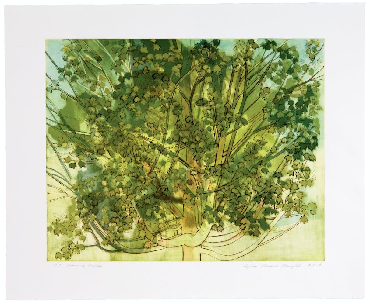 Sylvia Plimack Mangold's artwork called Summer Maple, 2008