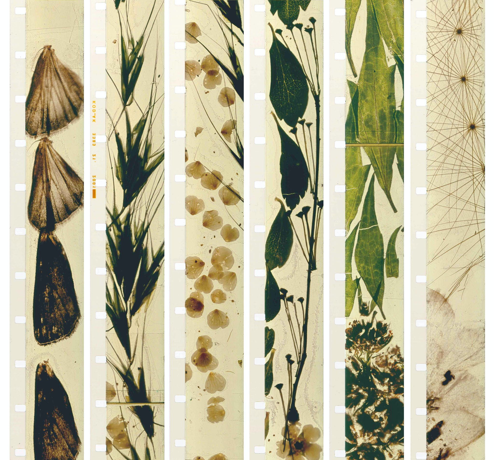 Stan Brakhage, Mothlight, 1963 (film strips)
