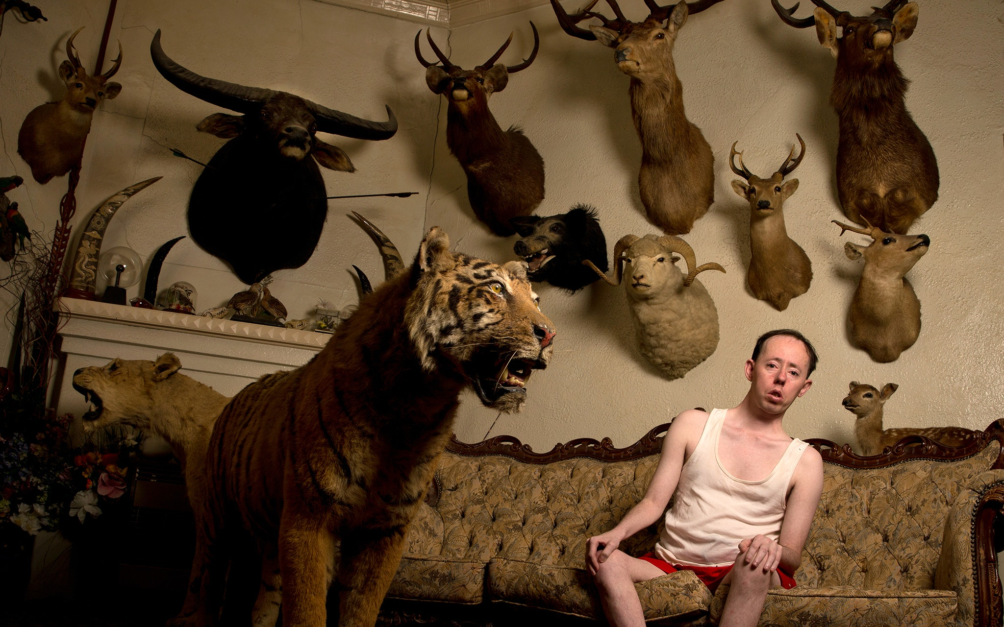 Man sitting on couch in front of a taxidermy tiger and several animal trophies hanging on the wall behind him.