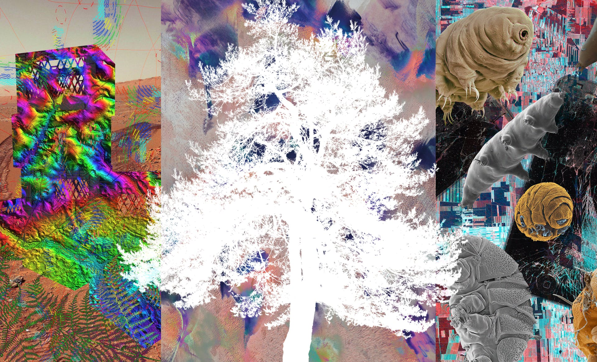 Colorful collage incorporating silhouette of tree, tardigrades, Mars landscape, broken telephone, milk crates