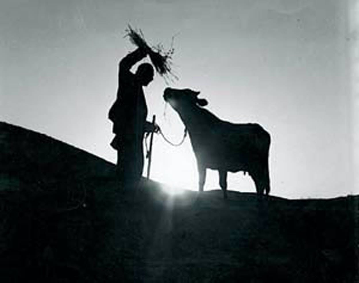Fuzzy black and white image of a man holding hay up to a cow.