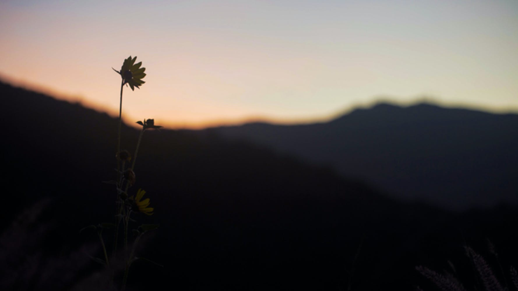Image of flower silhouetted in foreground with mountain in background