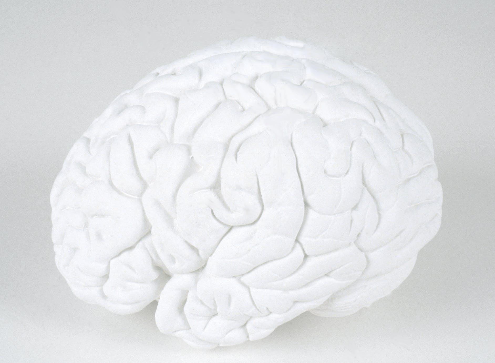 brain sculpture Katharina Fritsch