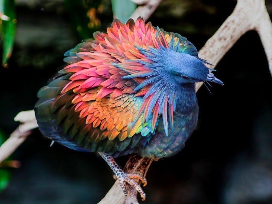 Gradient -- iridescence in birds