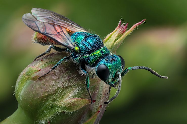 Gradient -- iridescence in insects